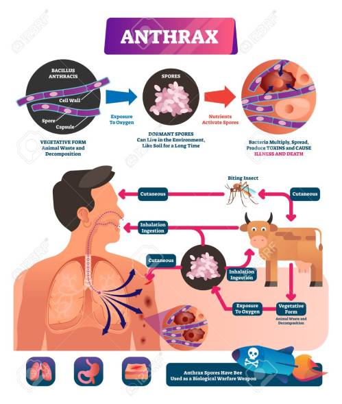 small resolution of anthrax vector illustration labeled medical infection disease cycle scheme bacterial illness used as biological