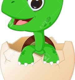 cute baby turtles hatching stock vector 61664637 [ 782 x 1300 Pixel ]