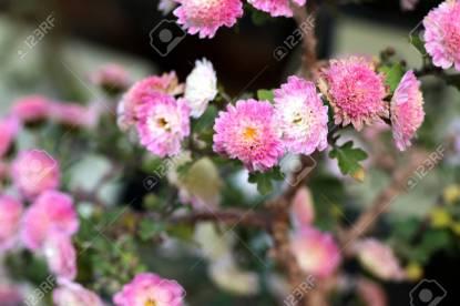 「韓国の花 」の画像検索結果