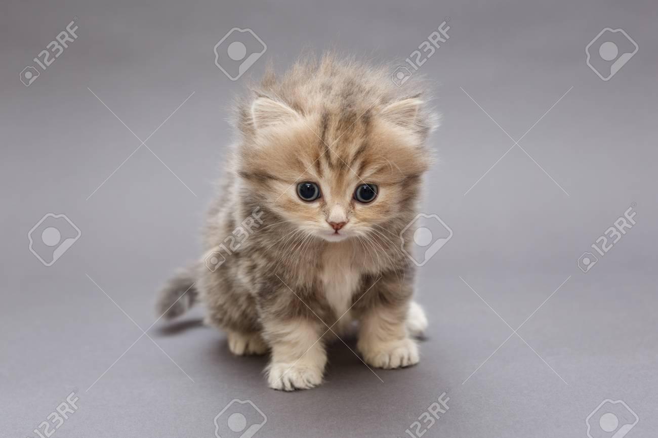 Funny Kitten Background