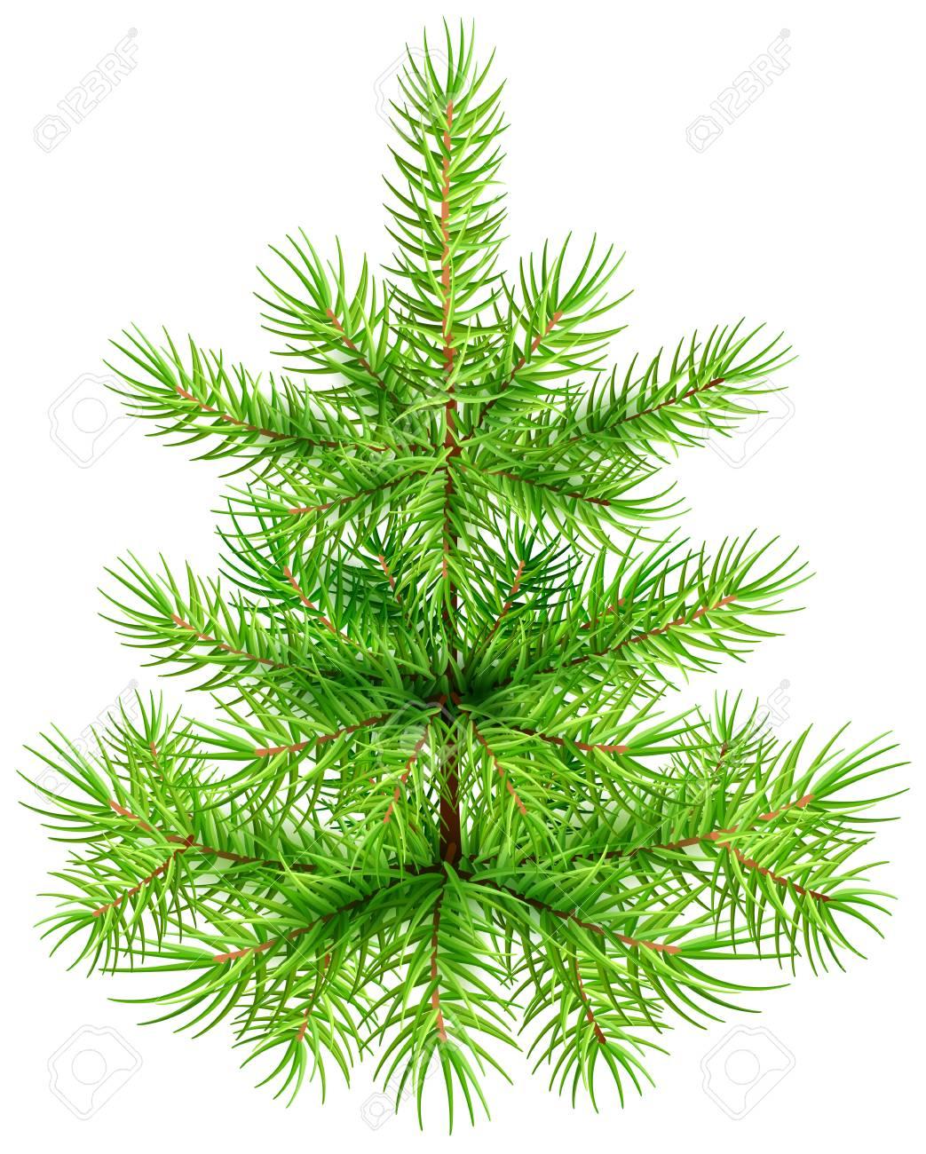 green small christmas pine