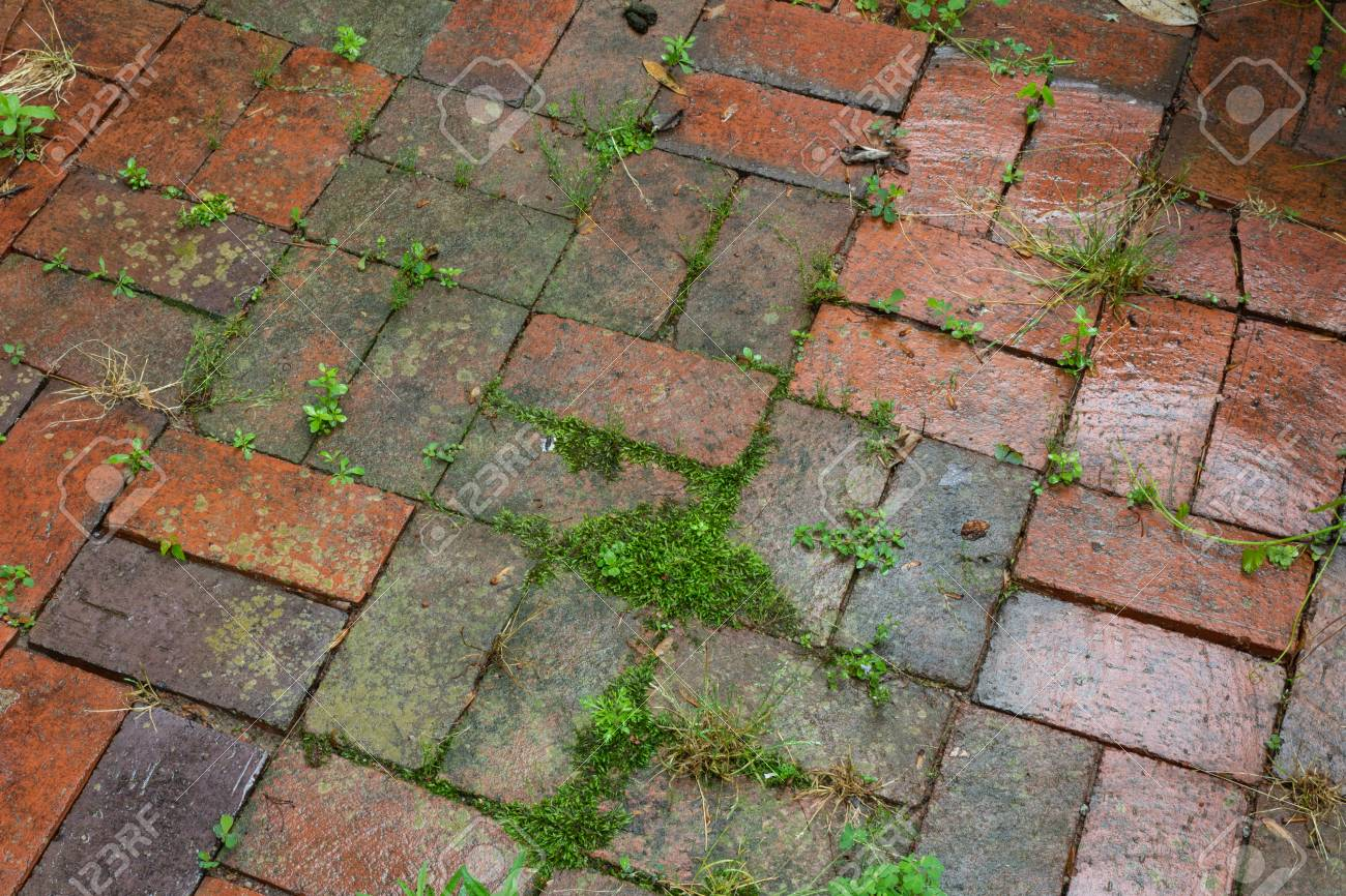 wet brick pavers with