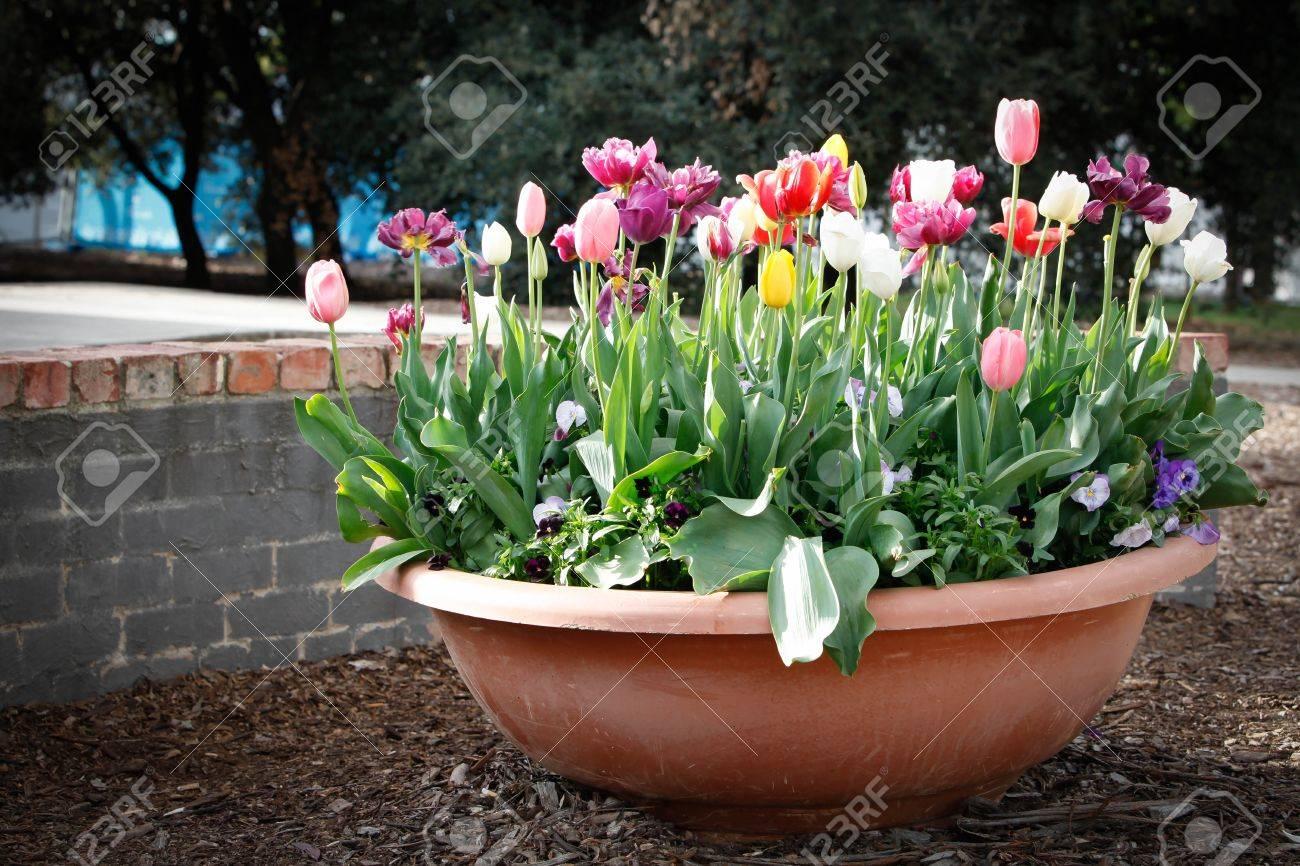 Eleletsitz Tulip Garden Design Images