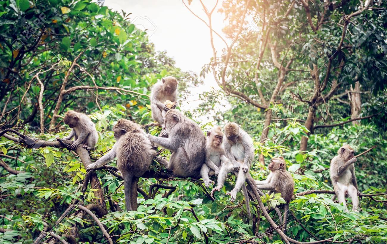 Liburan Dibali Monkey Forest