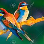 Beautiful Colorful Birds In The Warm Rays Of The Sun Unusual Stock Photo Picture And Royalty Free Image Image 91330470