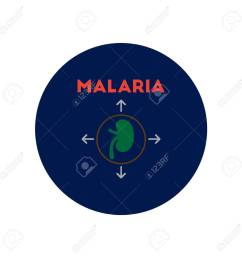 vector vector icon on circle various symptoms of malaria on the bodies [ 1300 x 1300 Pixel ]