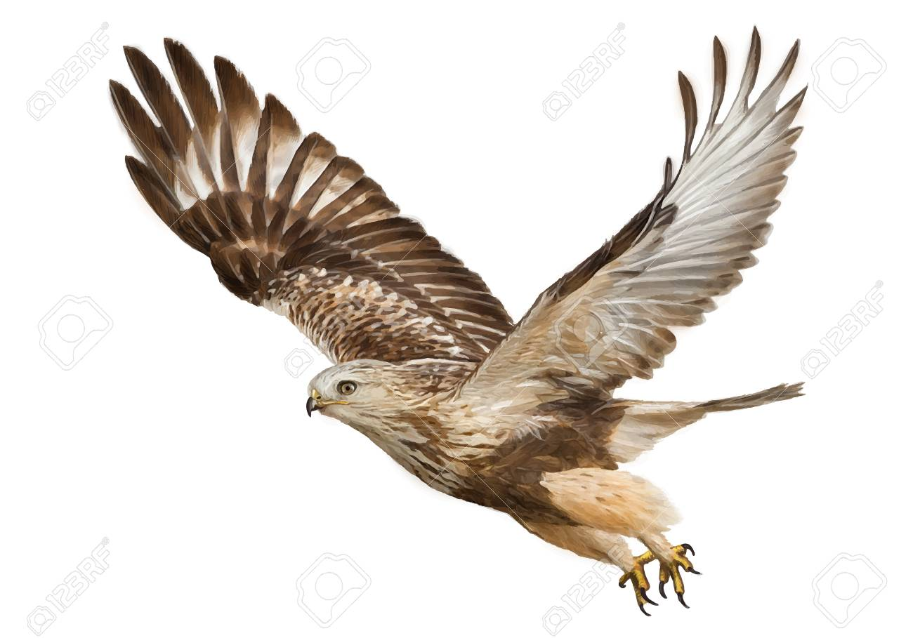 hawk flying hand draw