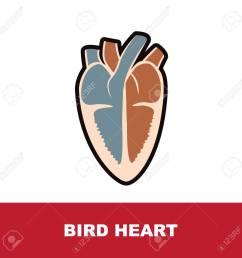 bird schematic heart anatomy vector illustration on white stock vector 89405904 [ 1300 x 1296 Pixel ]