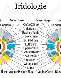 Iridology or iris diagnostic chart with accurate description of the corresponding internal organs and body parts also rh rf