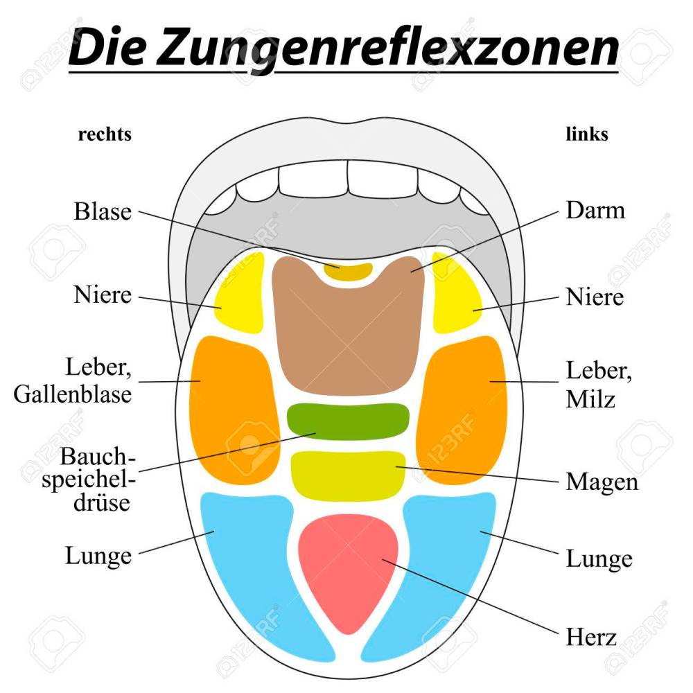 medium resolution of tongue with reflexology areas of the corresponding internal organs german labeling isolated illustration on