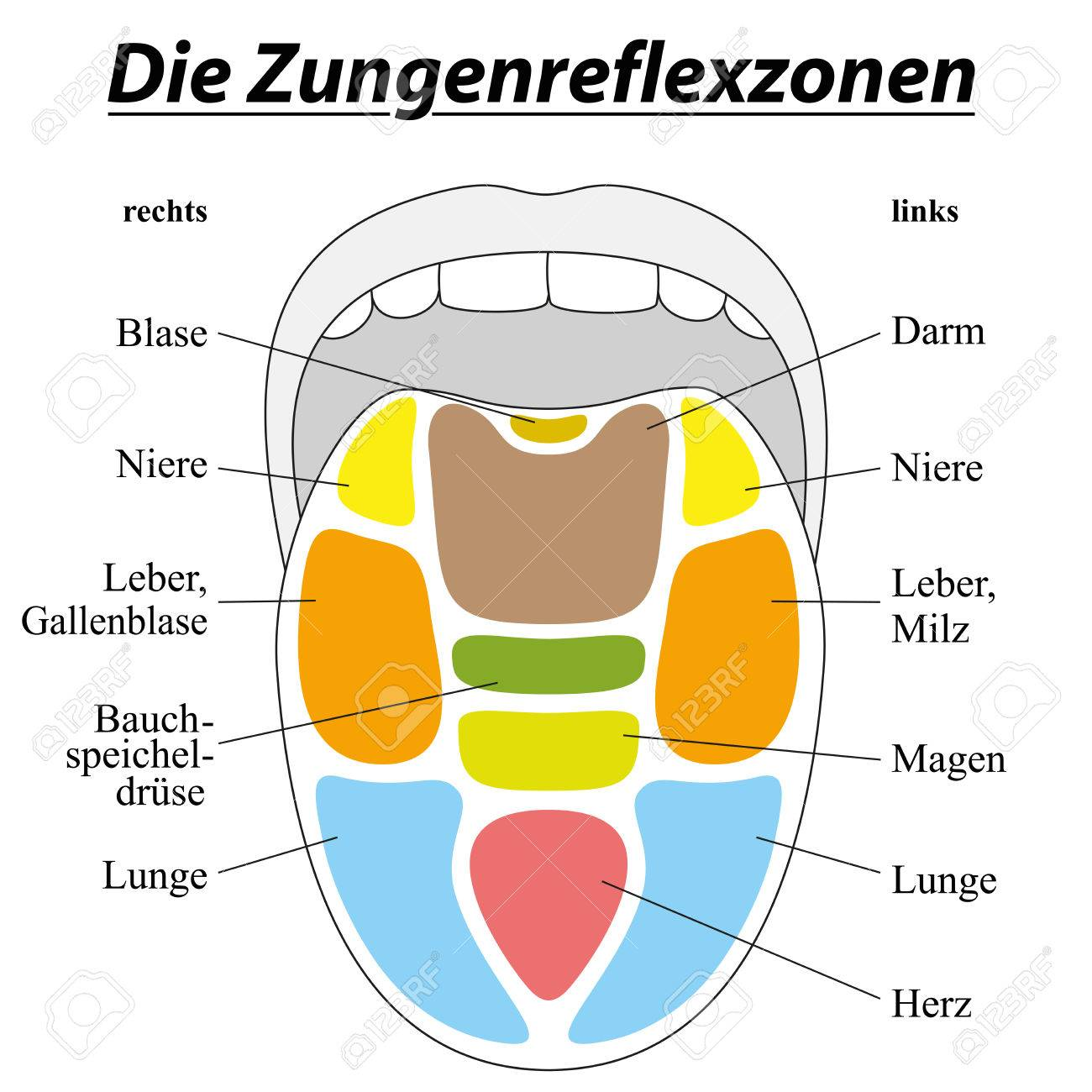 hight resolution of tongue with reflexology areas of the corresponding internal organs german labeling isolated illustration on