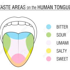 Human Taste Buds Diagram 7 Pin Flat Wiring Areas Of The Tongue Colored Division With Zones For Bitter
