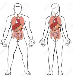 digestive tract with internal organs male and female body schematic human anatomy illustration  [ 1300 x 1300 Pixel ]