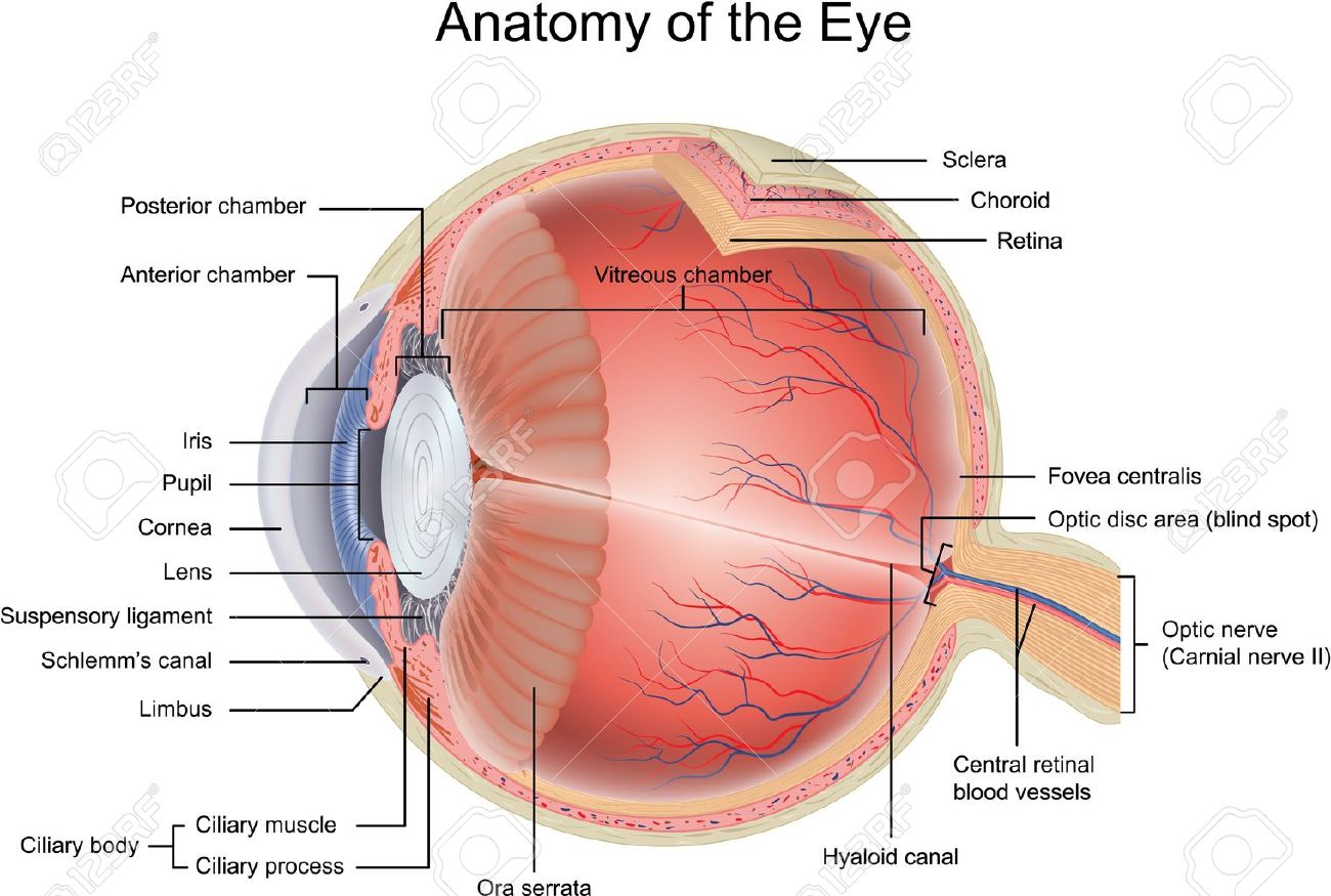 hight resolution of eye diagram unmasa dalha