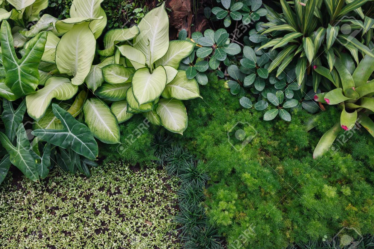 Grune Zimmerpflanzen