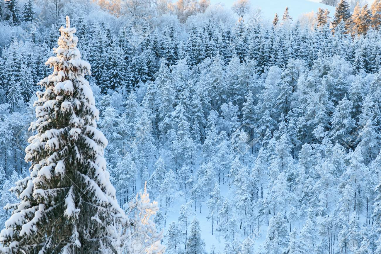 view of the winter