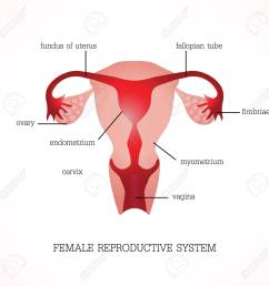 structure and function of human female reproductive anatomy system isolated on background human anatomy education [ 1300 x 1300 Pixel ]