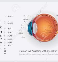 human eye anatomy with eye vision for glasses vector illustration stock vector 98366735 [ 1300 x 812 Pixel ]