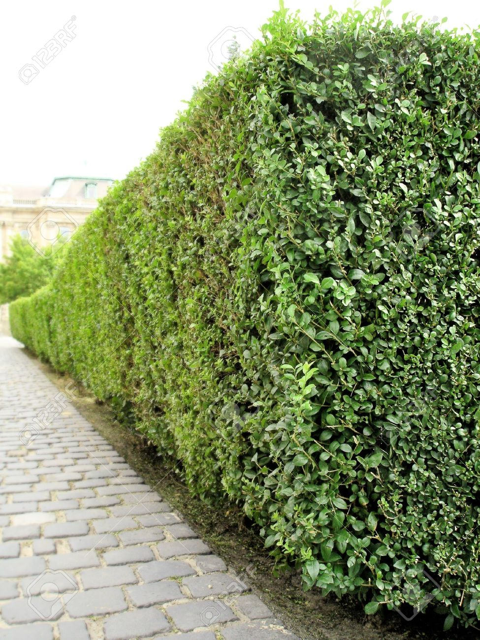 Green Bush Garden Perspective Stock Photo Picture And Royalty Free Image Image 21608813