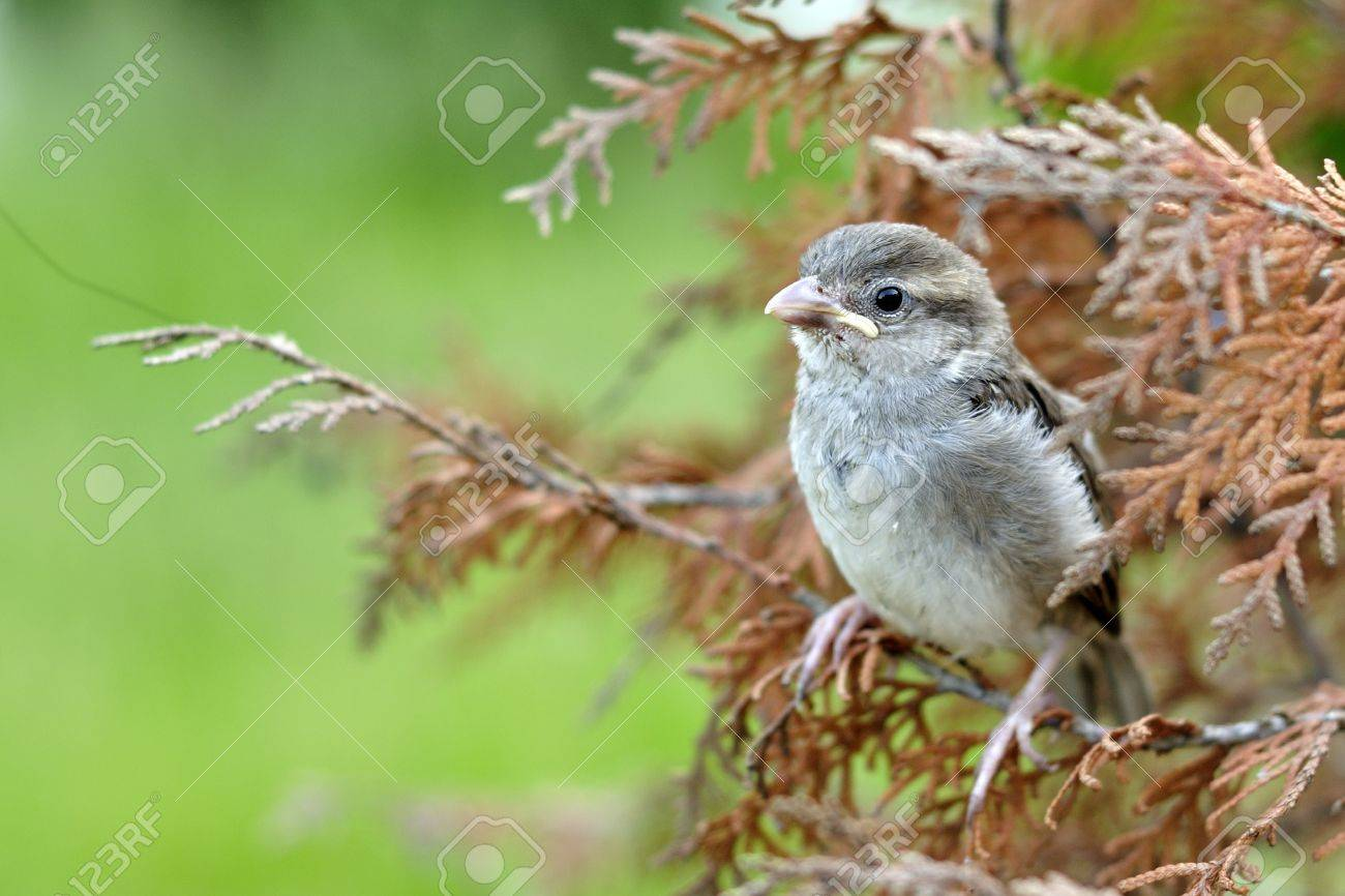 A Cute Tiny Sparrow With Beautiful Background Stock Photo Picture And Royalty Free Image Image 9772622
