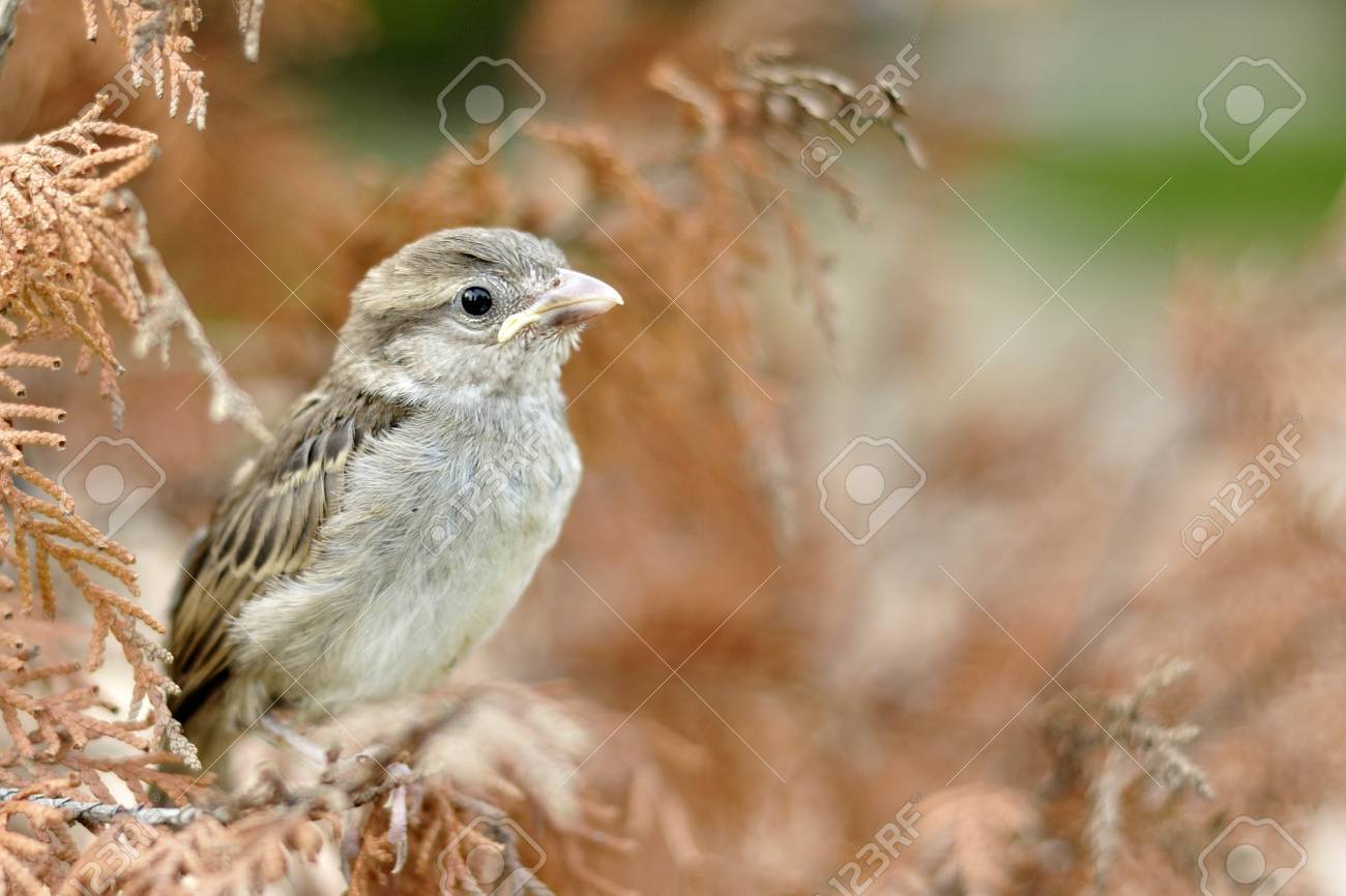 A Cute Tiny Sparrow With Beautiful Background Stock Photo Picture And Royalty Free Image Image 9772625