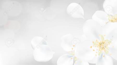 Color Blanco De Fondo De La Primavera De Color Rosa Flores De La Flor Del árbol De La Ilustración De Pétalos De La Flor Ilustraciones Vectoriales Clip Art Vectorizado Libre De Derechos