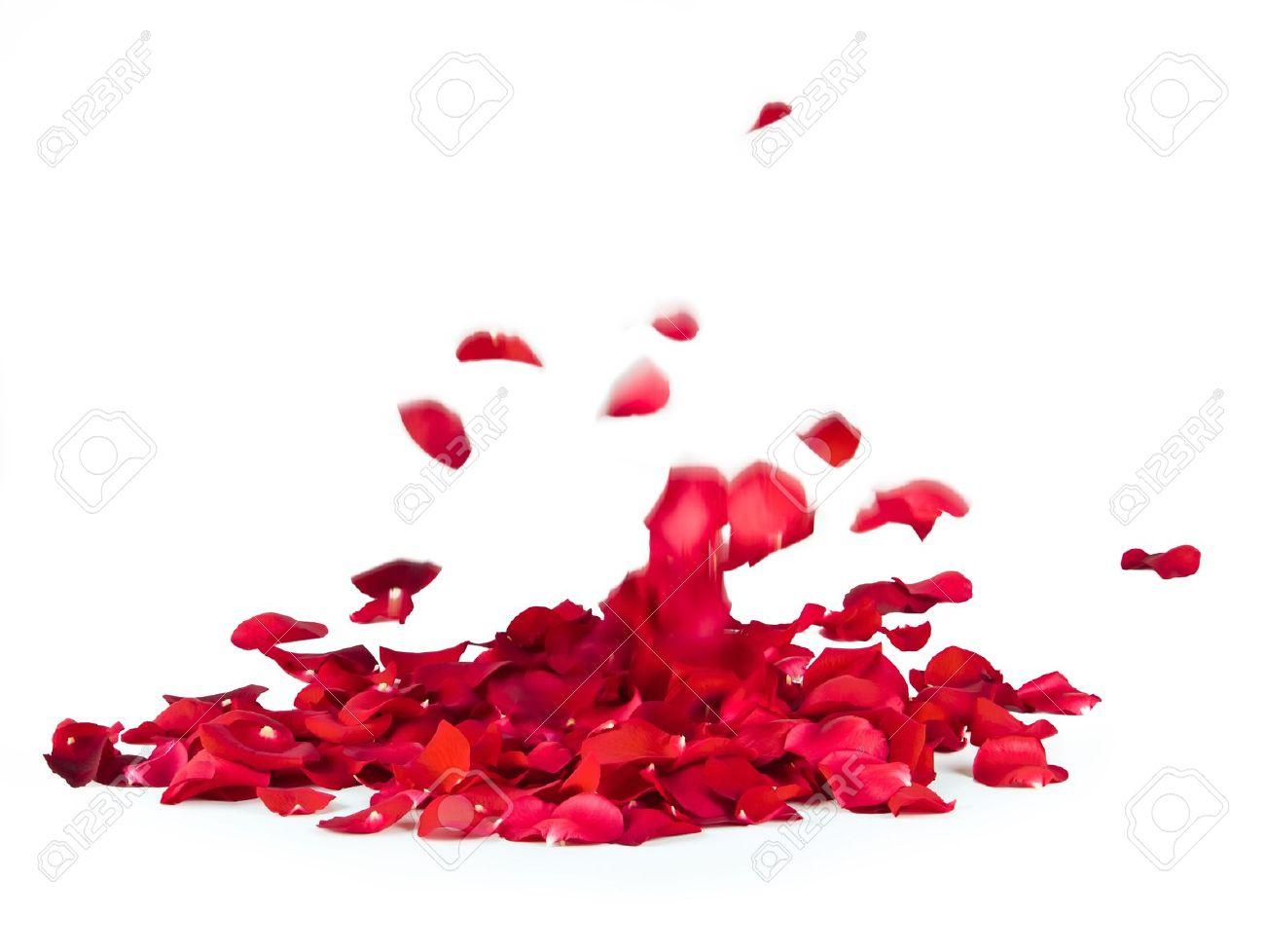 falling rose petals on