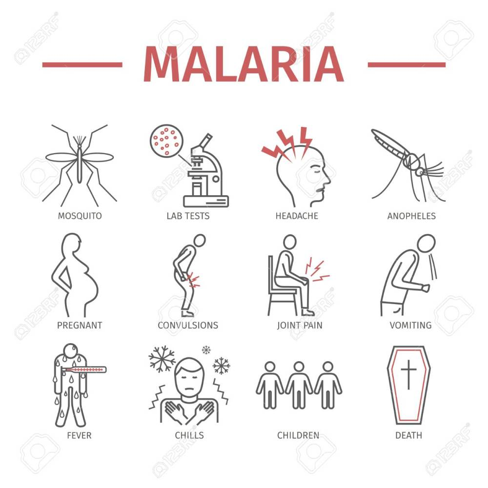 medium resolution of malaria line icon infographics symptoms vector signs for web graphics stock vector