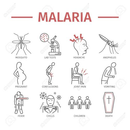 small resolution of malaria line icon infographics symptoms vector signs for web graphics stock vector