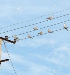 birds turtledove on electric wires stock photo picture and birds turtledove on electric wires stock [ 1300 x 838 Pixel ]