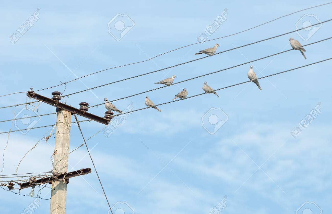 hight resolution of birds turtledove on electric wires stock photo picture and birds turtledove on electric wires stock