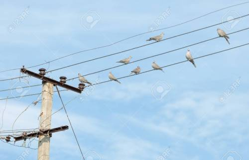 small resolution of birds turtledove on electric wires stock photo picture and birds turtledove on electric wires stock