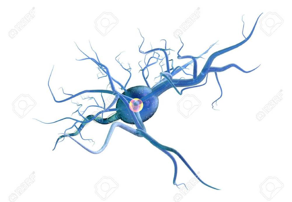medium resolution of high quality 3d render of nerve cell isolated on white background stock photo