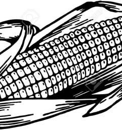 ear of corn stock vector 28335967 [ 1300 x 748 Pixel ]