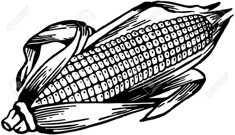 medium resolution of ear of corn stock vector 28335967
