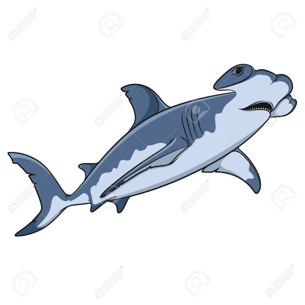 medium resolution of vector vector color illustration of the hammerhead shark isolated object on a white background