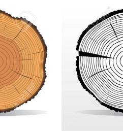 vector vector illustration of tree rings textures and saw cut tree trunk [ 1300 x 650 Pixel ]