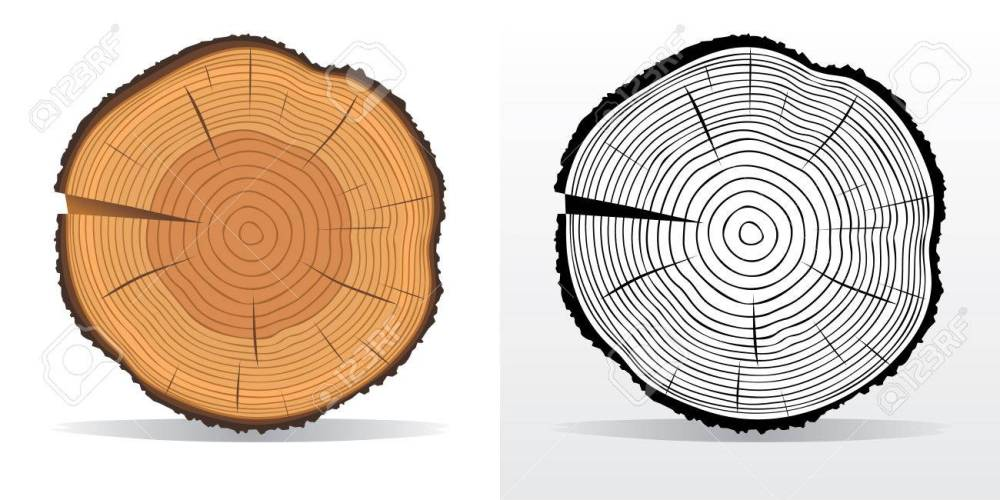 medium resolution of vector vector illustration of tree rings textures and saw cut tree trunk