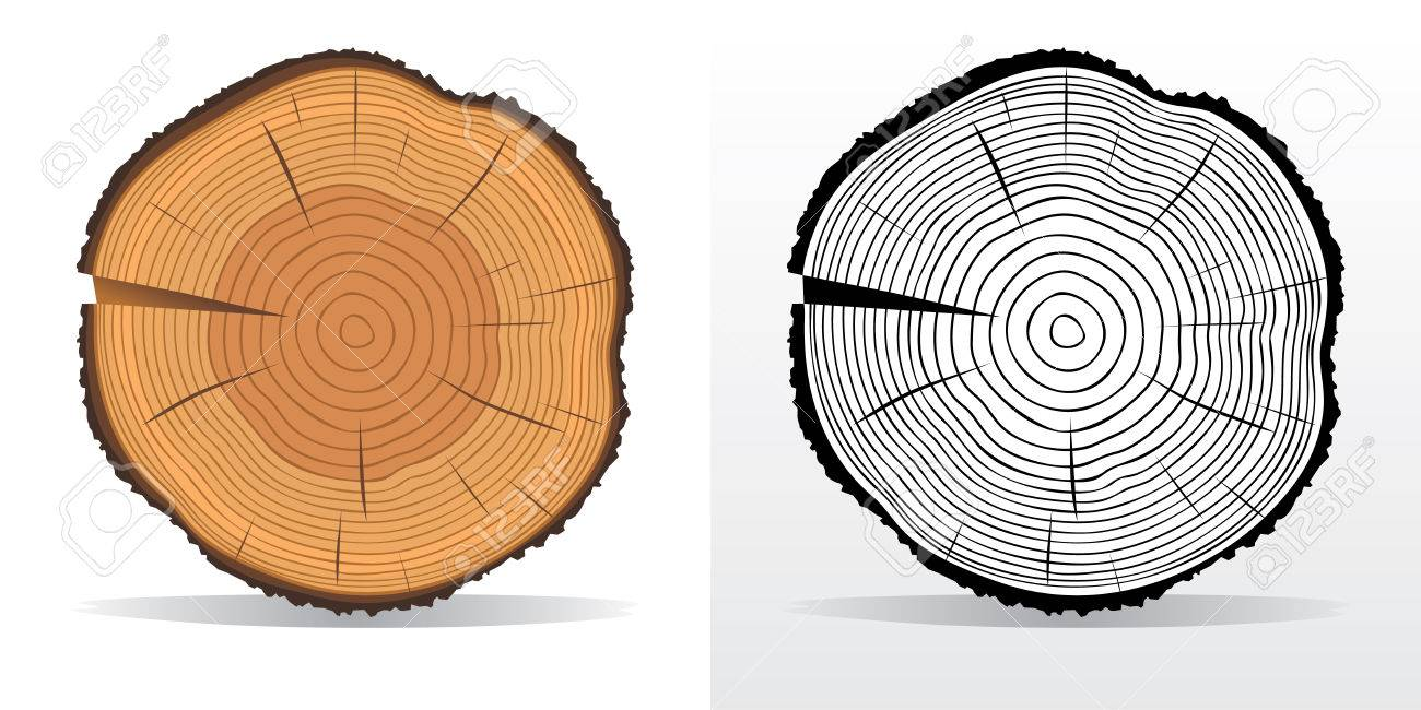 hight resolution of vector vector illustration of tree rings textures and saw cut tree trunk