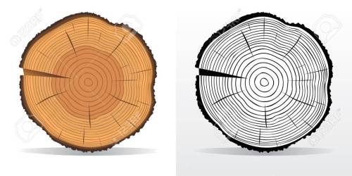 small resolution of vector vector illustration of tree rings textures and saw cut tree trunk