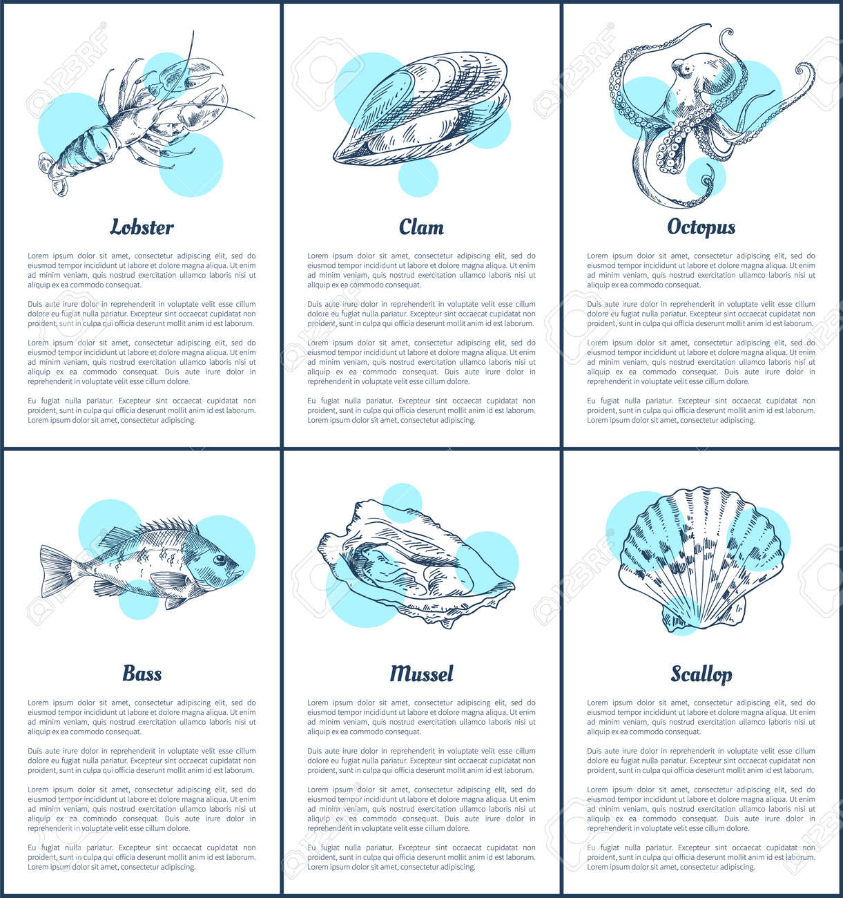 hight resolution of bass fish and octopus set marine dwellers scallop and mussel lobster with claws