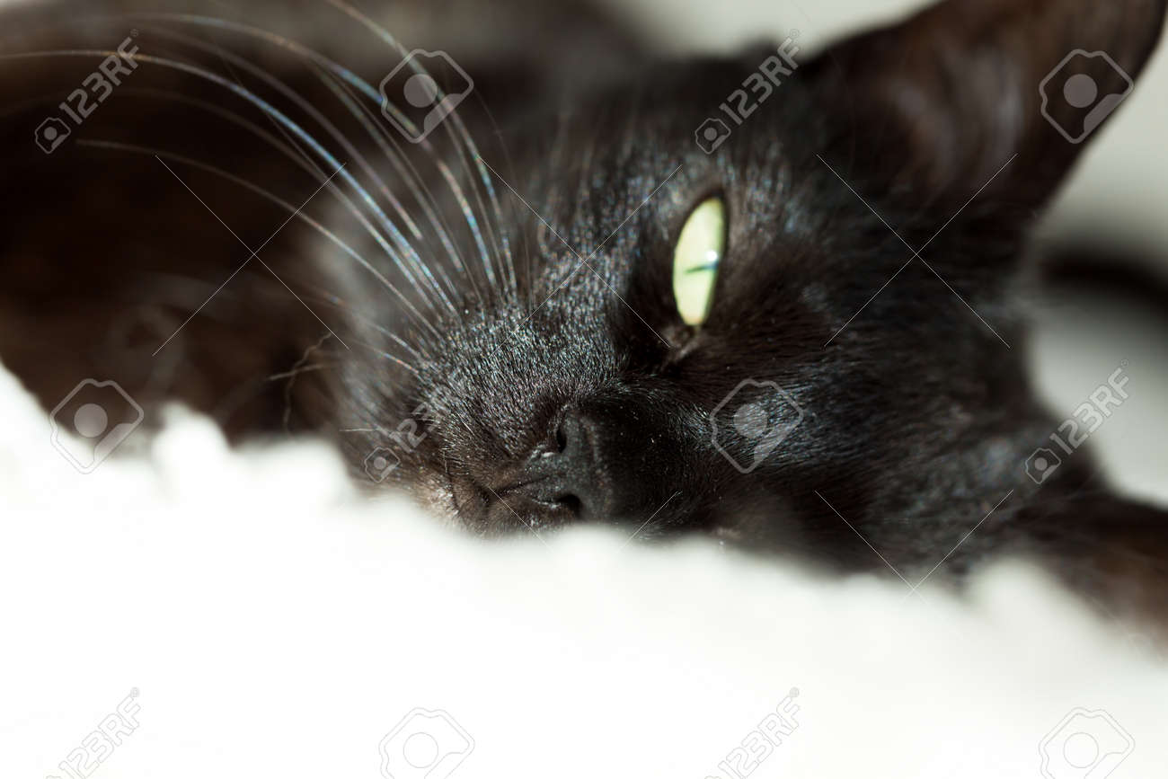 black cat lying on