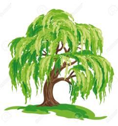 vector drawing of willow tree eps8 stock vector 98052977 [ 1300 x 1300 Pixel ]