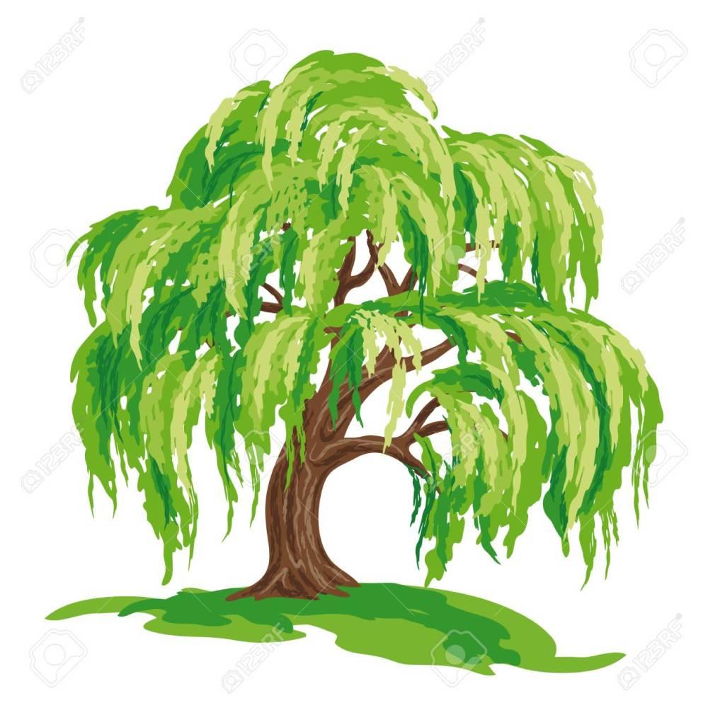 medium resolution of vector drawing of willow tree eps8 stock vector 98052977