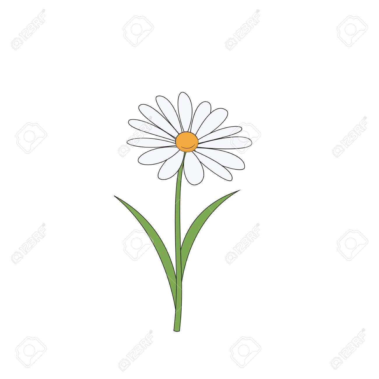 hight resolution of cartoon daisy simple flower on white background vector illustration stock vector 76081580