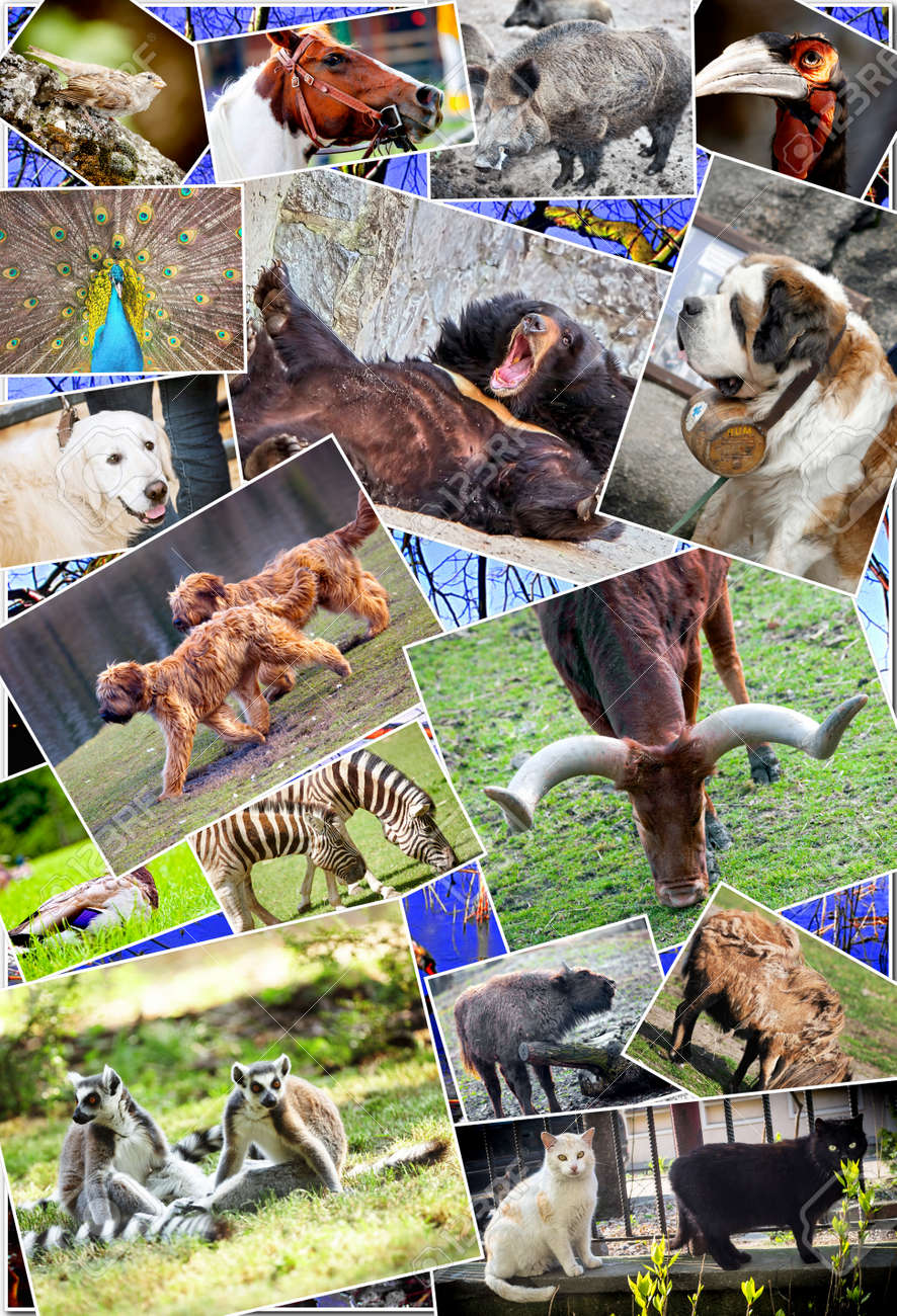 Animal Collage : animal, collage, Animal, Collage, Various, Species, Stock, Photo,, Picture, Royalty, Image., Image, 23332296.