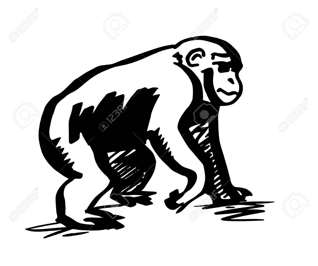 chimpanzee monkey silhouette line