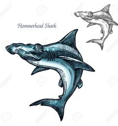 hammerhead shark sketch vector fish icon isolated ocean predatory winghead shark fish species isolated [ 1300 x 1300 Pixel ]