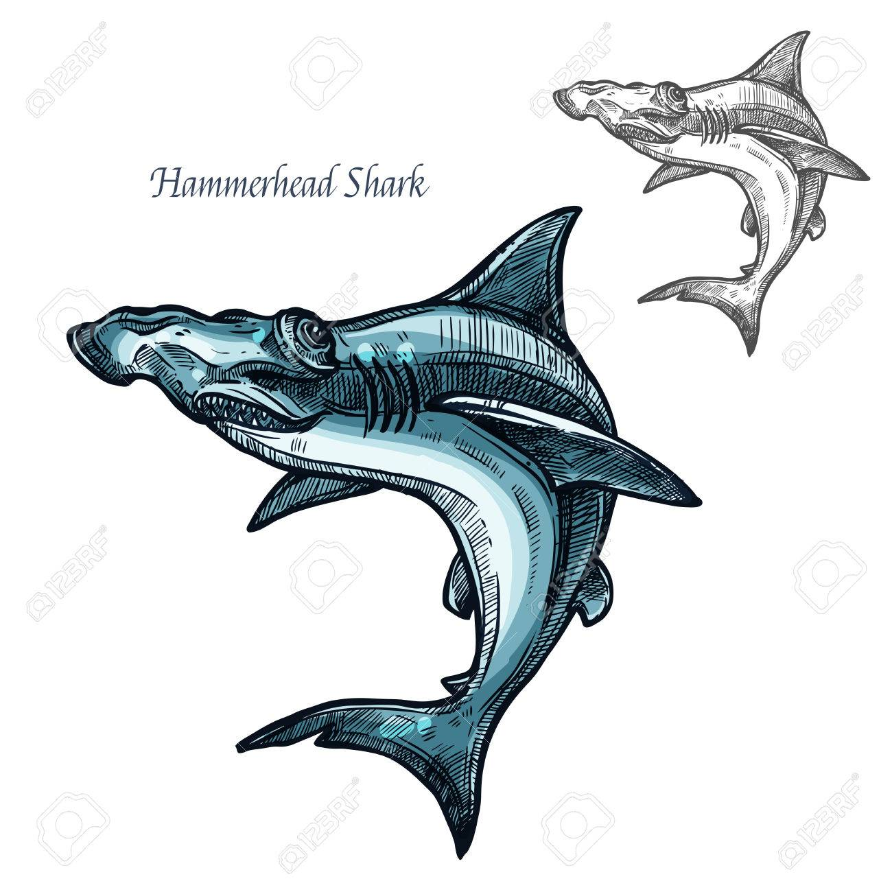 hight resolution of hammerhead shark sketch vector fish icon isolated ocean predatory winghead shark fish species isolated