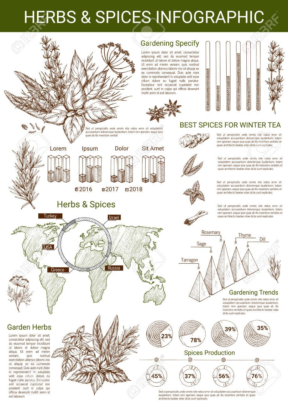 medium resolution of spices and herbs infographics template vector design elements and diagrams on herbal seasonings on world